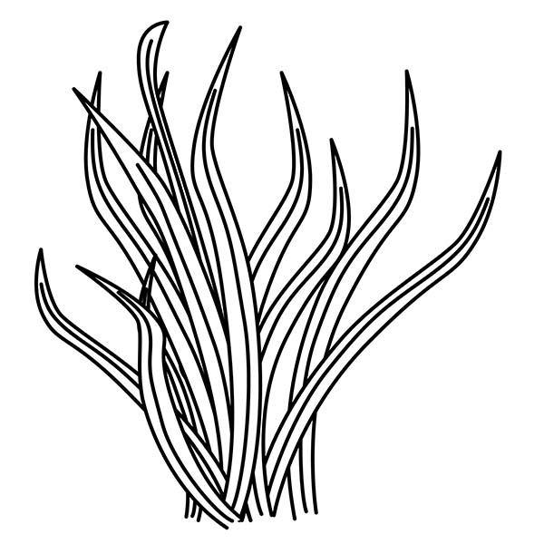 ocean plants coloring pages ocean coral drawings coral reef art coral drawing plants coloring ocean pages