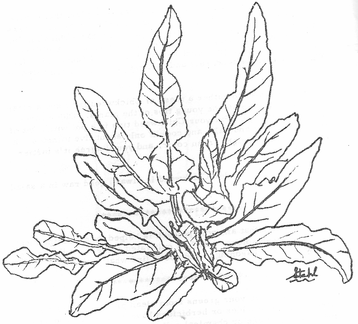 ocean plants coloring pages sea plants drawing at getdrawings free download ocean plants coloring pages
