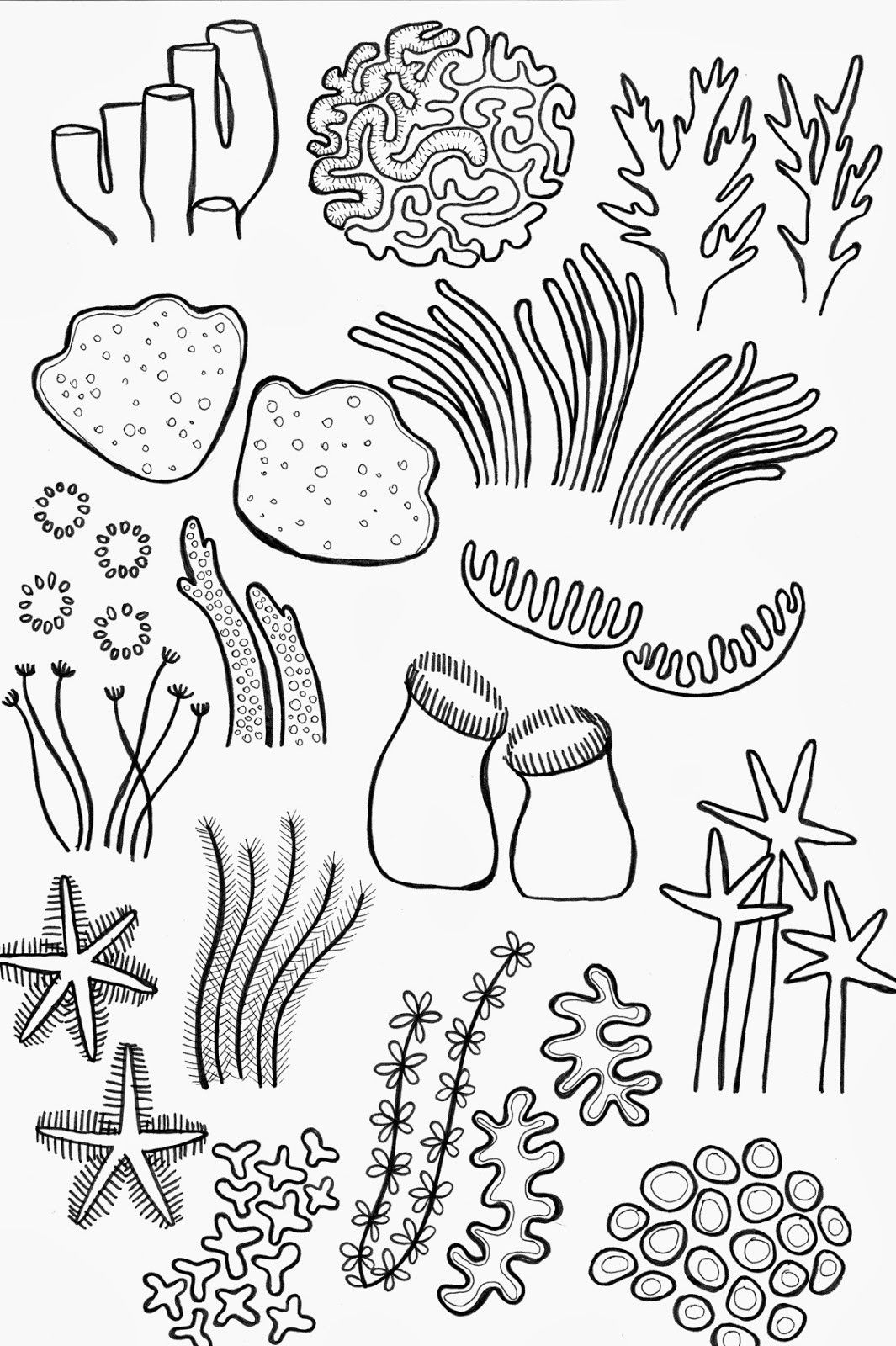ocean plants coloring pages sea plants drawing at getdrawings free download ocean plants pages coloring