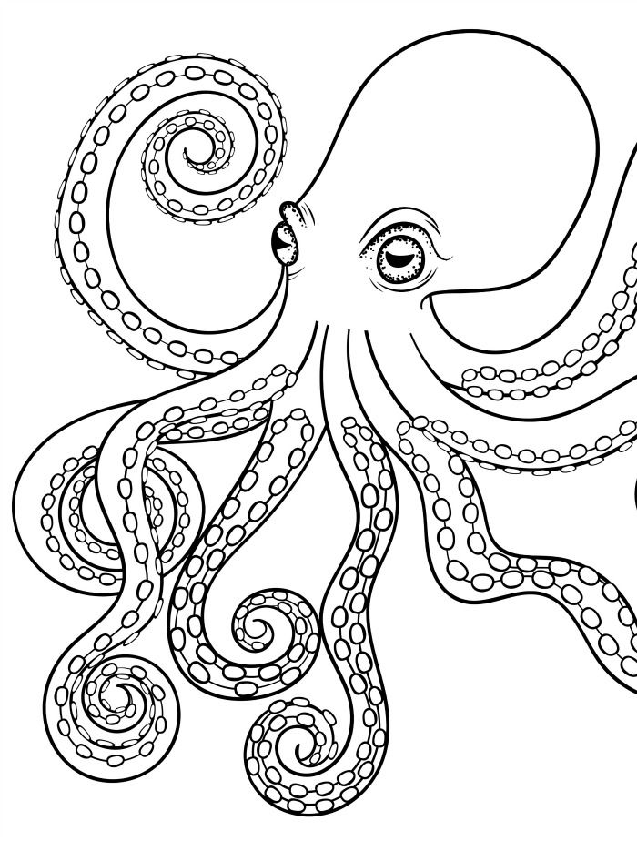 octopus coloring picture octopus coloring page seamarine coloring octopus picture