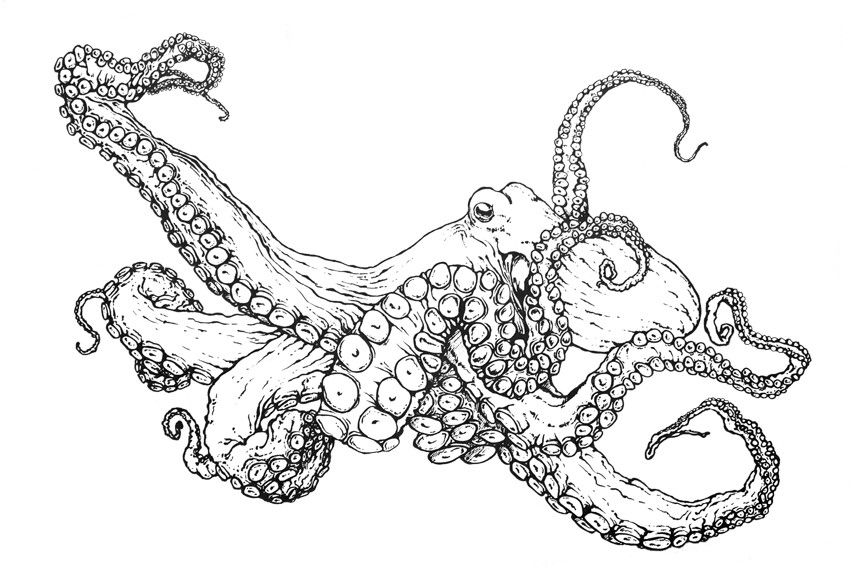 octopus coloring picture printable octopus coloring pages the inky octopus coloring octopus picture