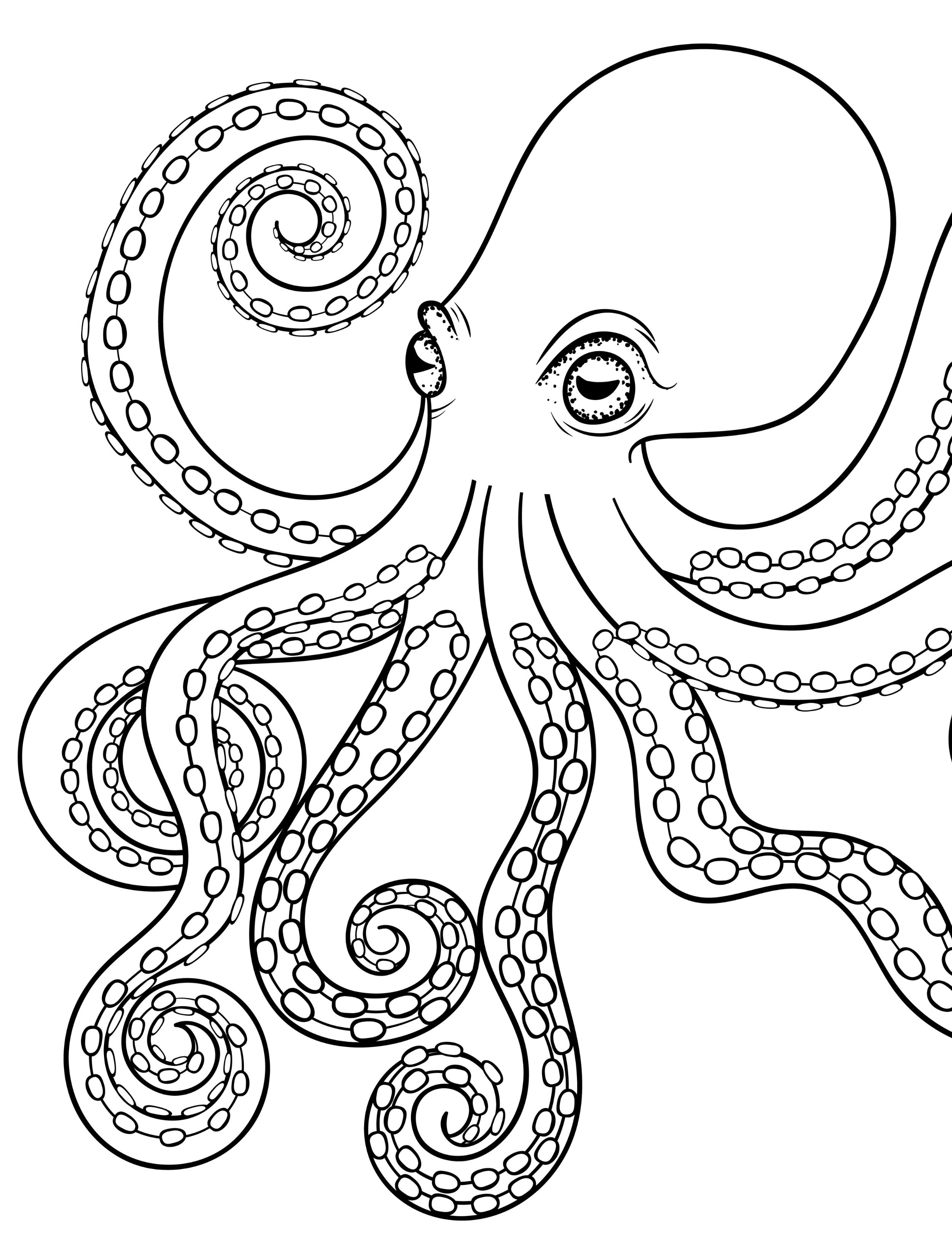 octopus pictures for coloring pin on art ideas coloring octopus for pictures