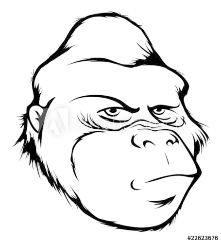 outline of a gorilla gorilla head drawing free download on clipartmag of a outline gorilla