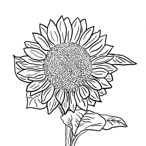 outline of a sunflower beccy39s place sunflower gerbera a of sunflower outline