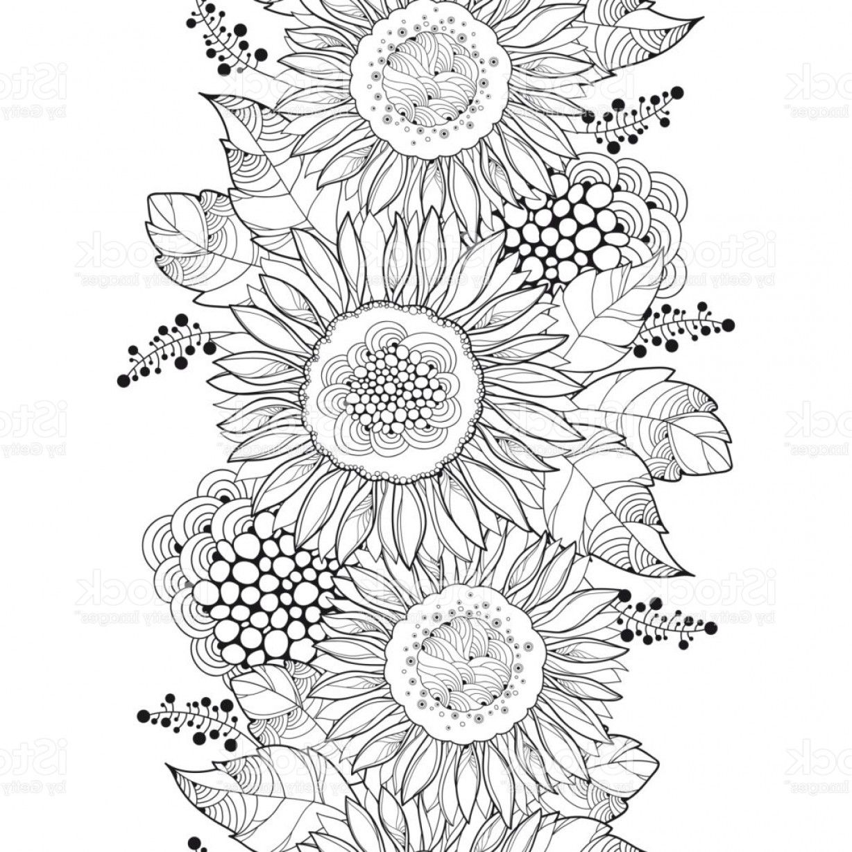 outline of a sunflower outline of a sunflower sunflower of outline a