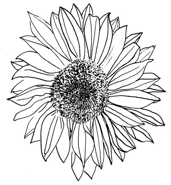 outline of a sunflower sunflower black and white drawing at getdrawings free of a outline sunflower
