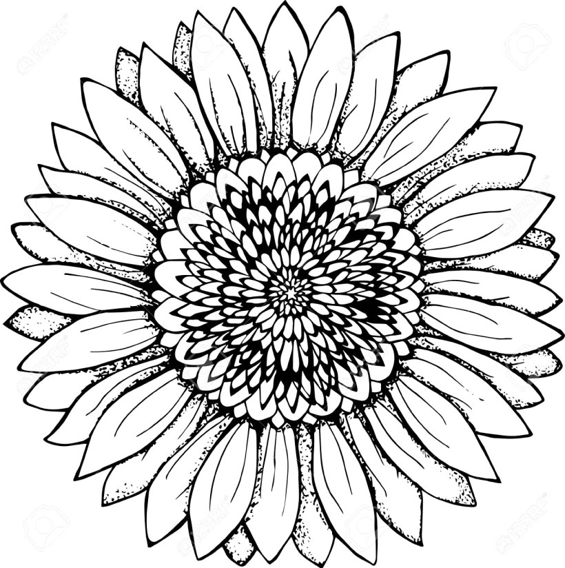 outline of a sunflower sunflower drawing college pinterest hipster drawings of sunflower outline a