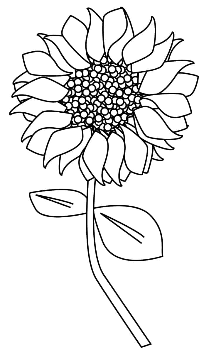 outline of a sunflower sunflower outline drawing at getdrawings free download a of sunflower outline