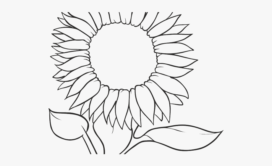 outline of a sunflower sunflower outline drawing at getdrawings free download outline a of sunflower