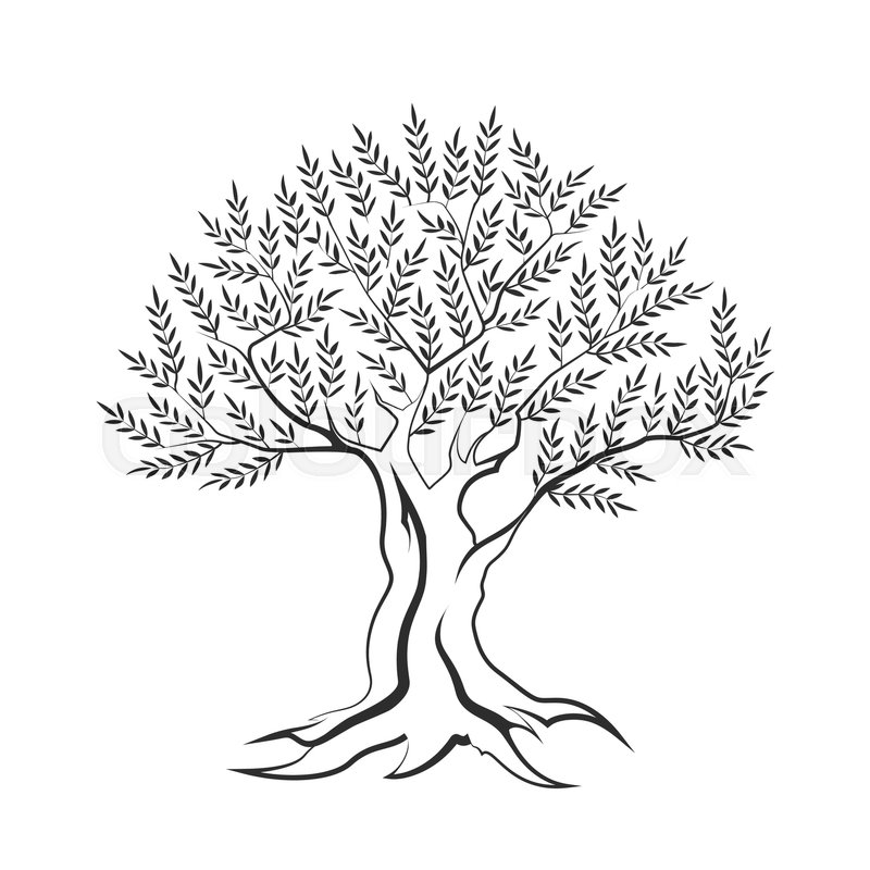 outline of a tree pine tree outline free download on clipartmag a of tree outline