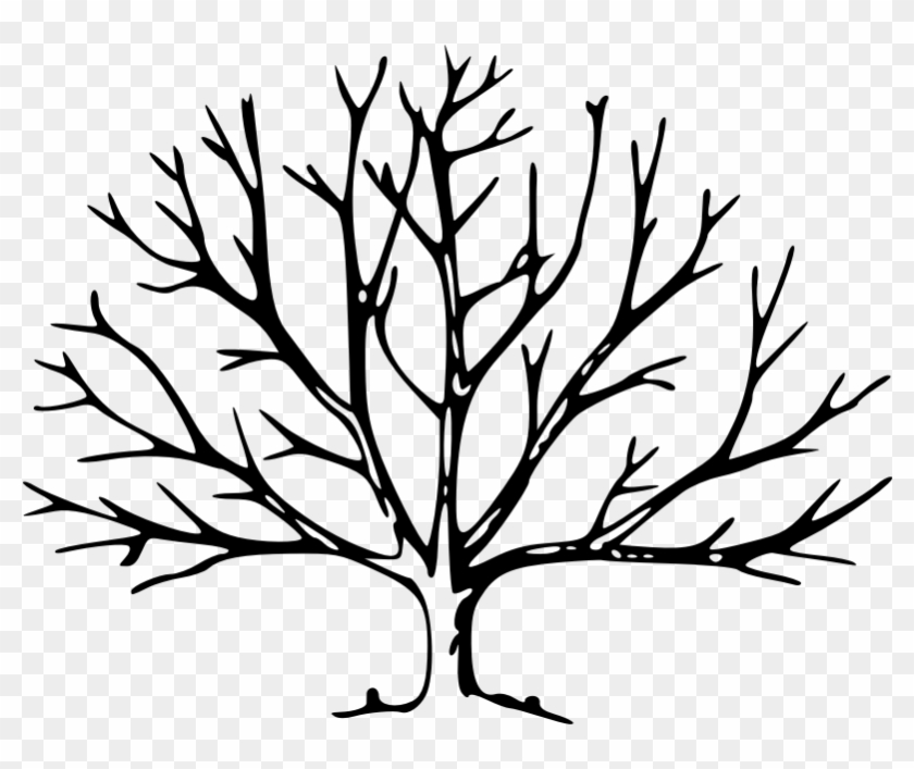 outline of a tree pine tree outline free download on clipartmag outline a of tree