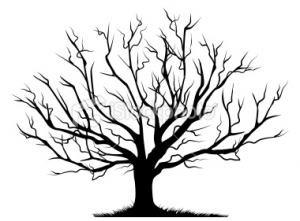 outline of a tree pine tree outline png 10 free cliparts download images tree of a outline