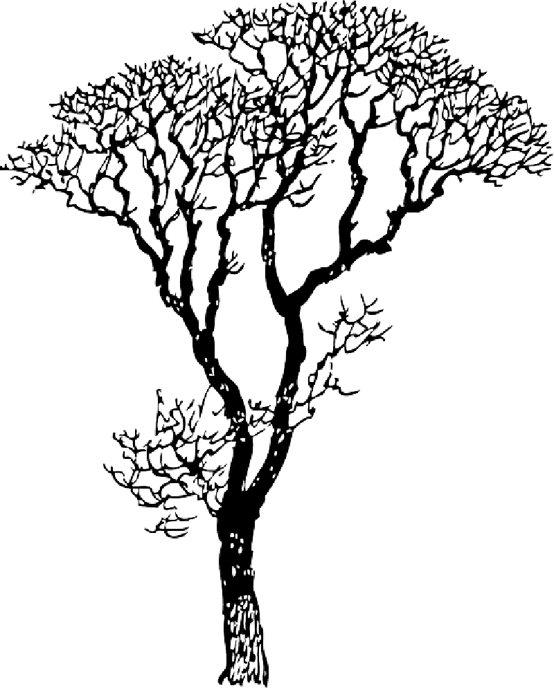 outline of a tree tree outline drawing at getdrawings free download of tree outline a