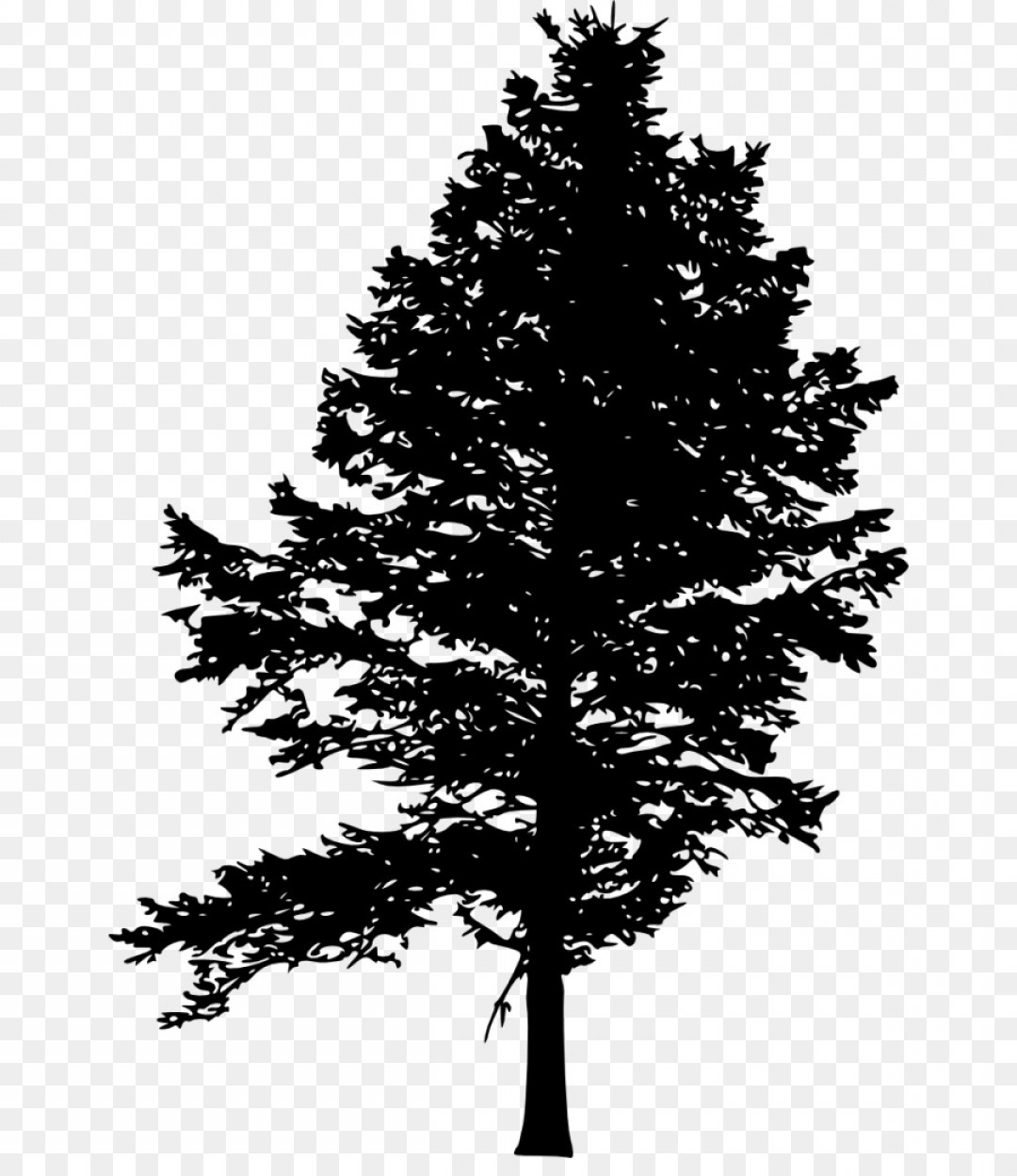outline of a tree tree outline drawing at getdrawings free download tree outline a of