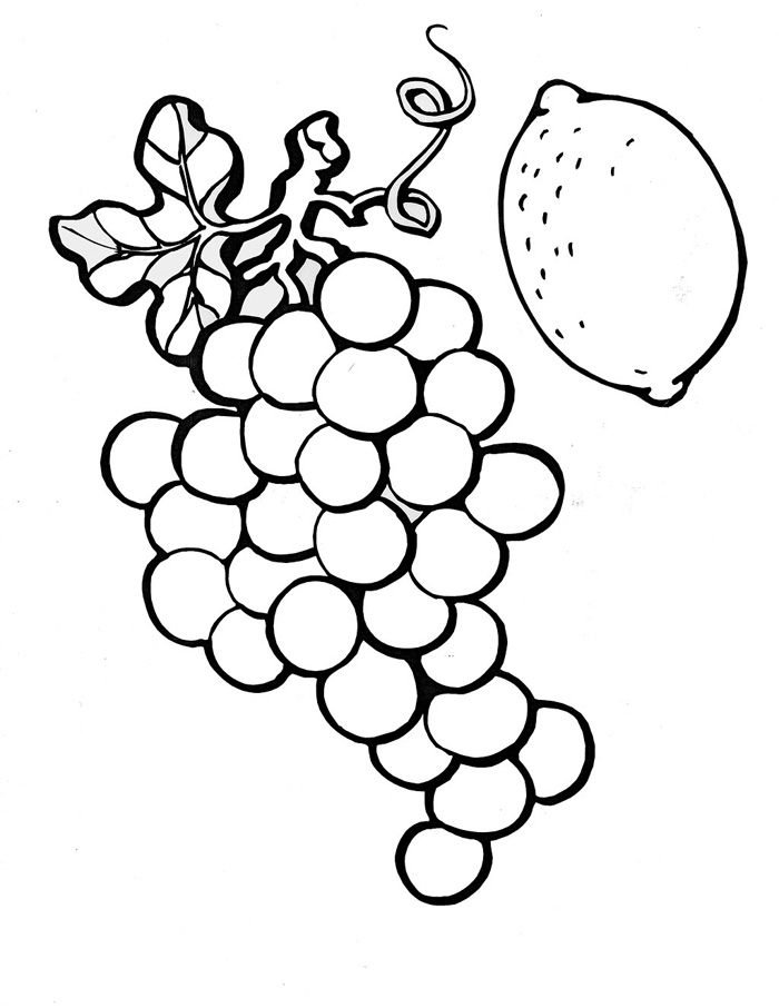 outline of fruits pictures set of outline black and white vector fruits stock outline of pictures fruits