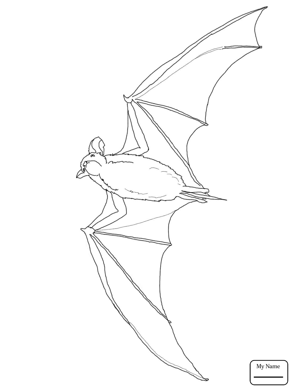 outline picture of bat cricket bat icons download free vector icons noun project of outline picture bat