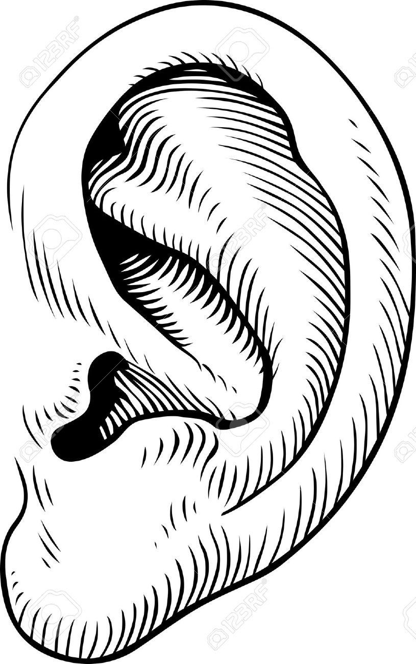 outline picture of ear ear vectors photos and psd files free download picture outline ear of