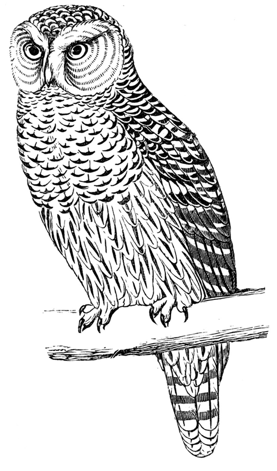 owl coloring pages for kids free printable owl coloring pages for kids cool2bkids for coloring kids owl pages