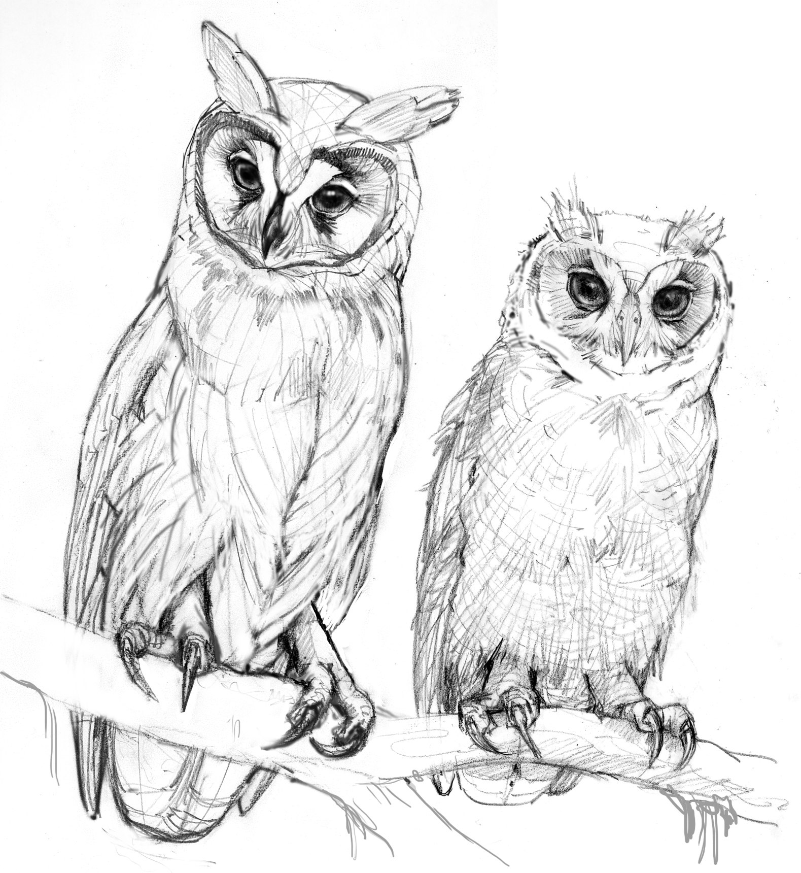 owl coloring pages for kids owl coloring pages for adults free detailed owl coloring owl coloring for pages kids