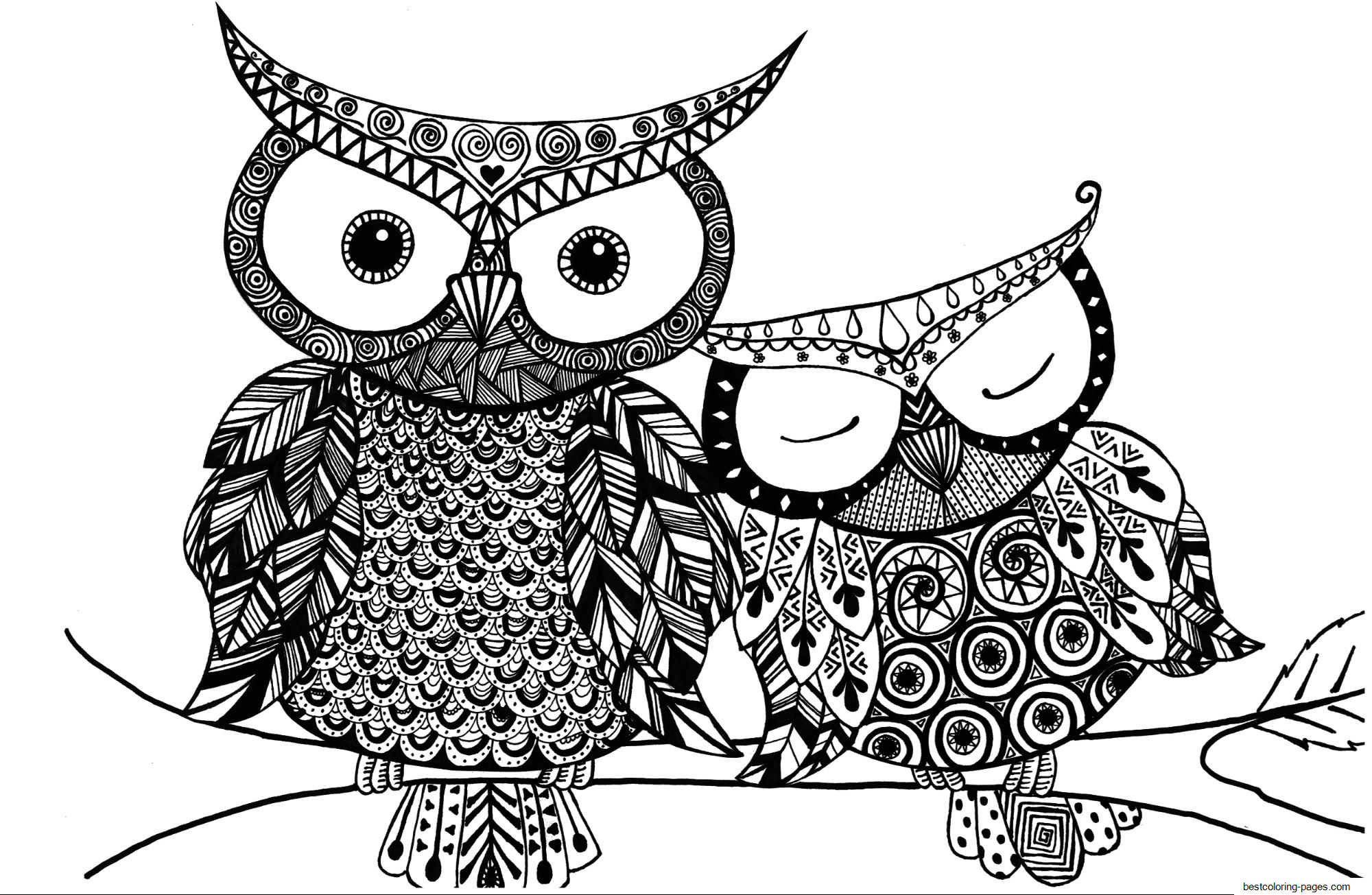 owl colour advanced adult owl coloring pages printable for kids colour owl