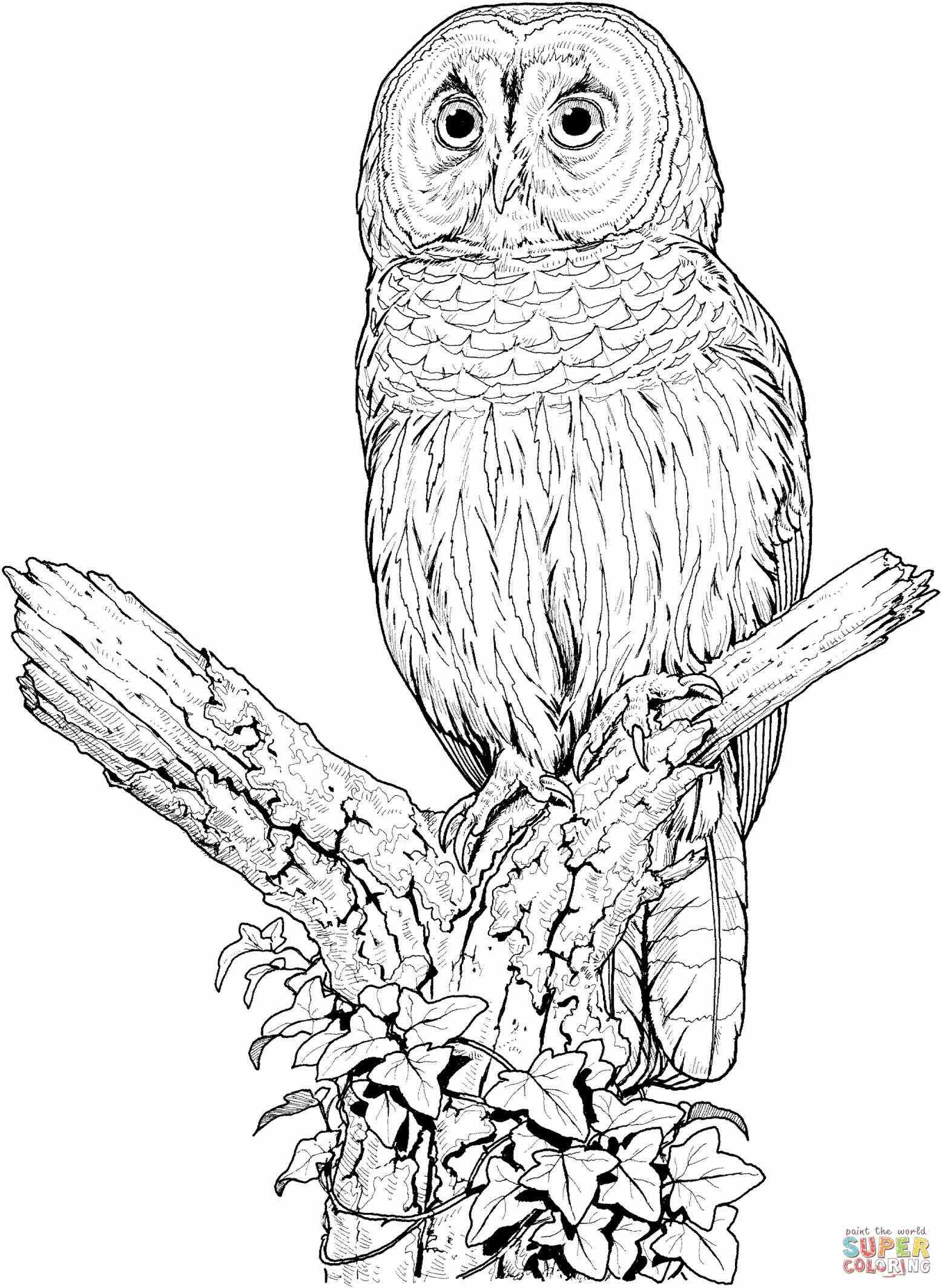 owl colour baby owl coloring pages getcoloringpagescom colour owl
