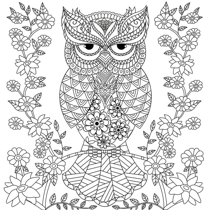 owl colour owl coloring pages for adults free detailed owl coloring owl colour 1 1