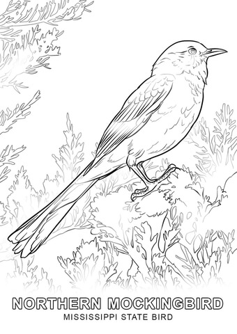 pa state bird mississippi state bird coloring page free printable pa bird state