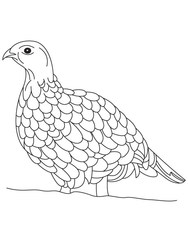 pa state bird pennsylvania state bird coloring page free coloring library pa bird state