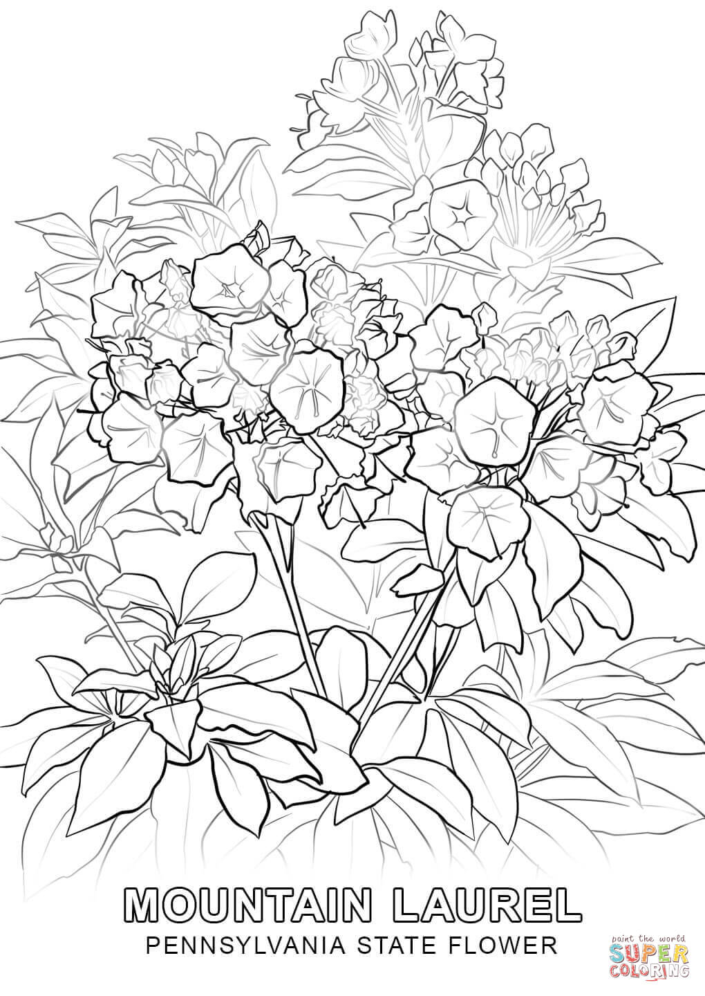 pa state bird pennsylvania state flower coloring page free printable pa bird state