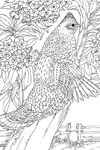 pa state bird state birds coloring pages purple kitty pa state bird