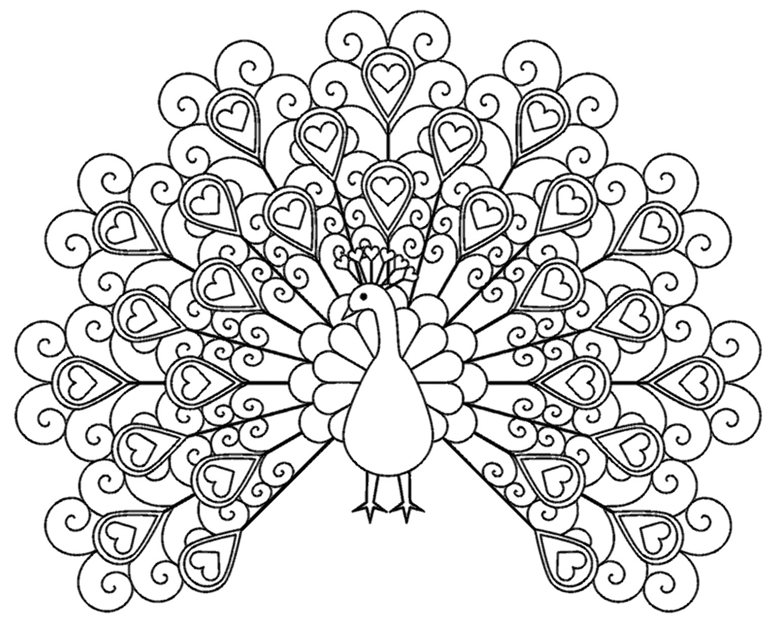 peacock coloring a simple drawing of male peacock coloring page kids play coloring peacock