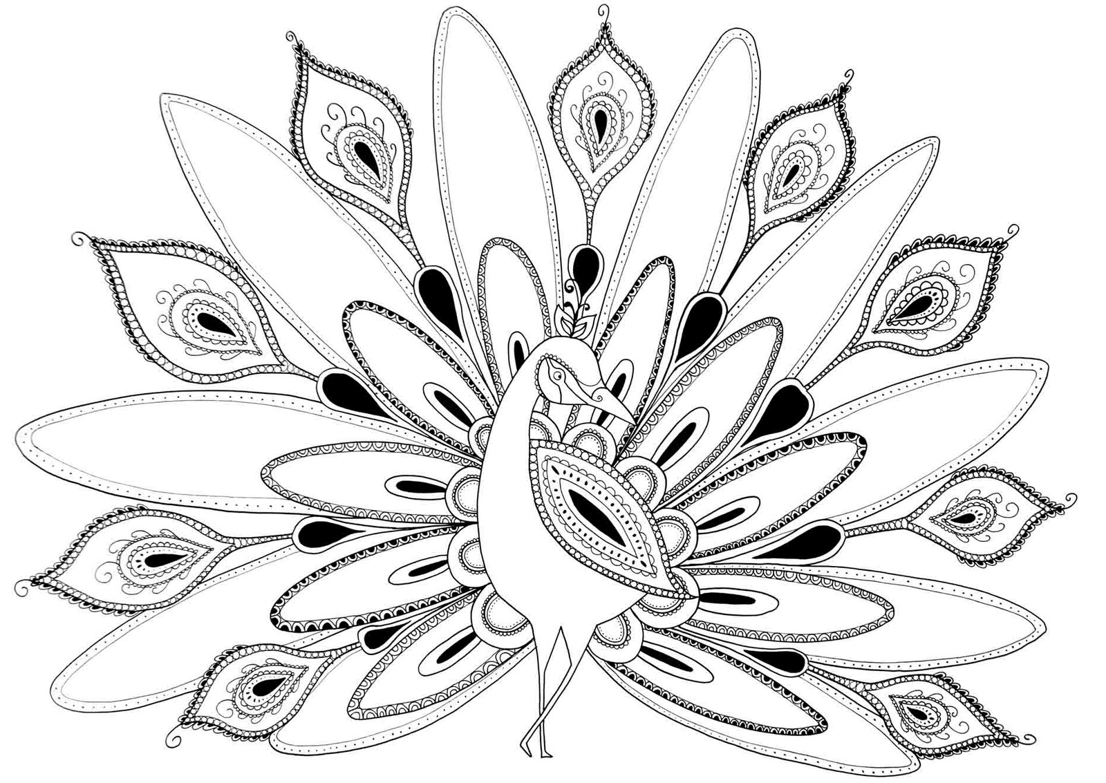 peacock coloring an illustration of green peacock coloring page kids play coloring peacock