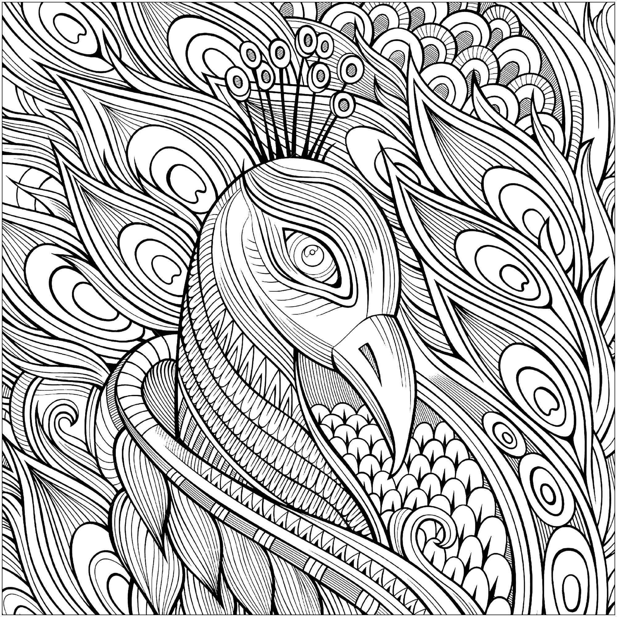 peacock coloring outline of a peacock drawing at getdrawings free download peacock coloring