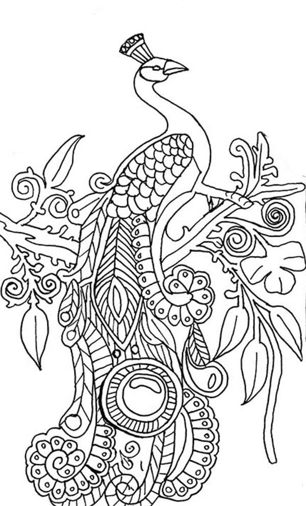 peacock coloring peacock coloring pages coloringrocks peacock peacock coloring
