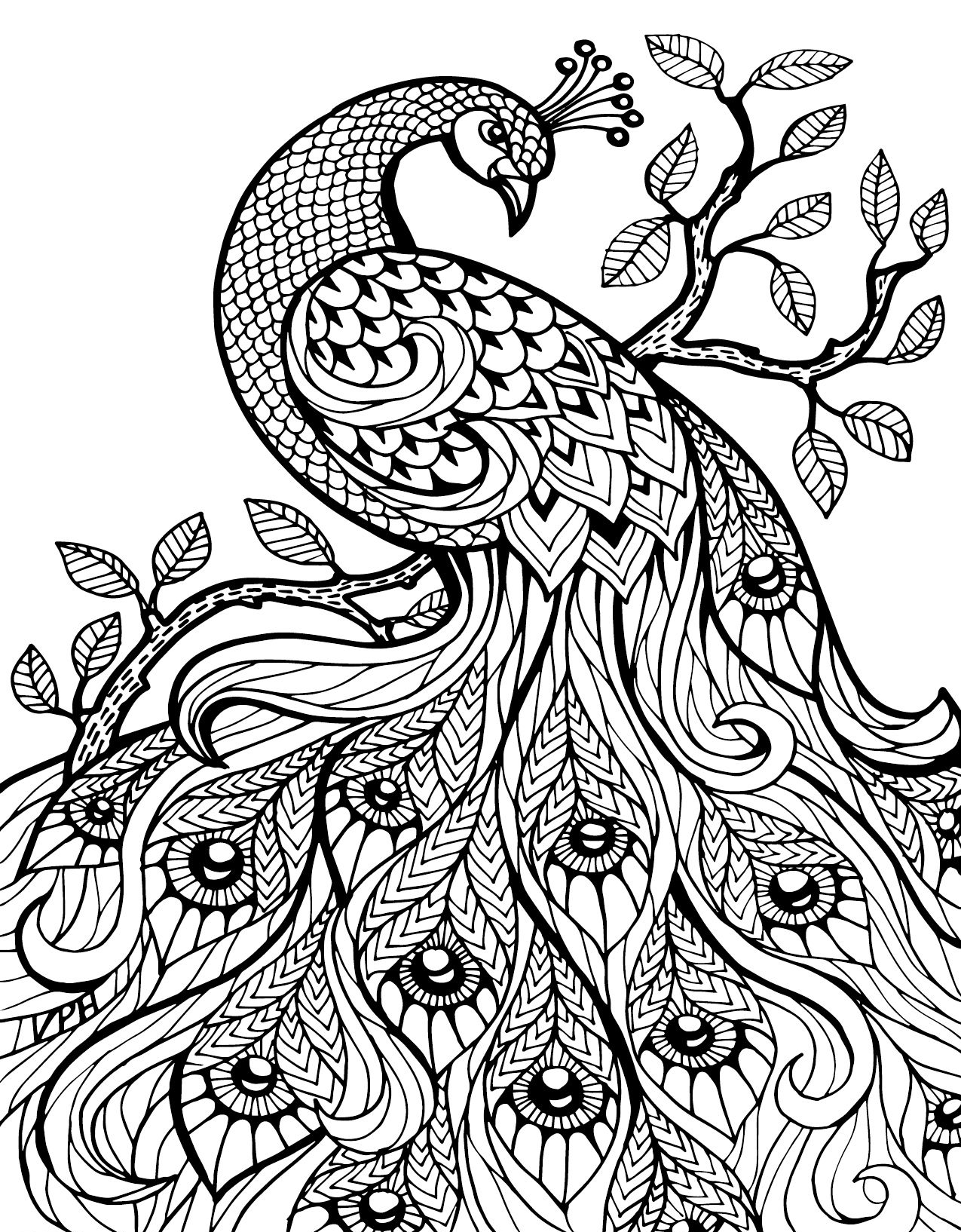peacock coloring peacock coloring pages for kids coloring peacock