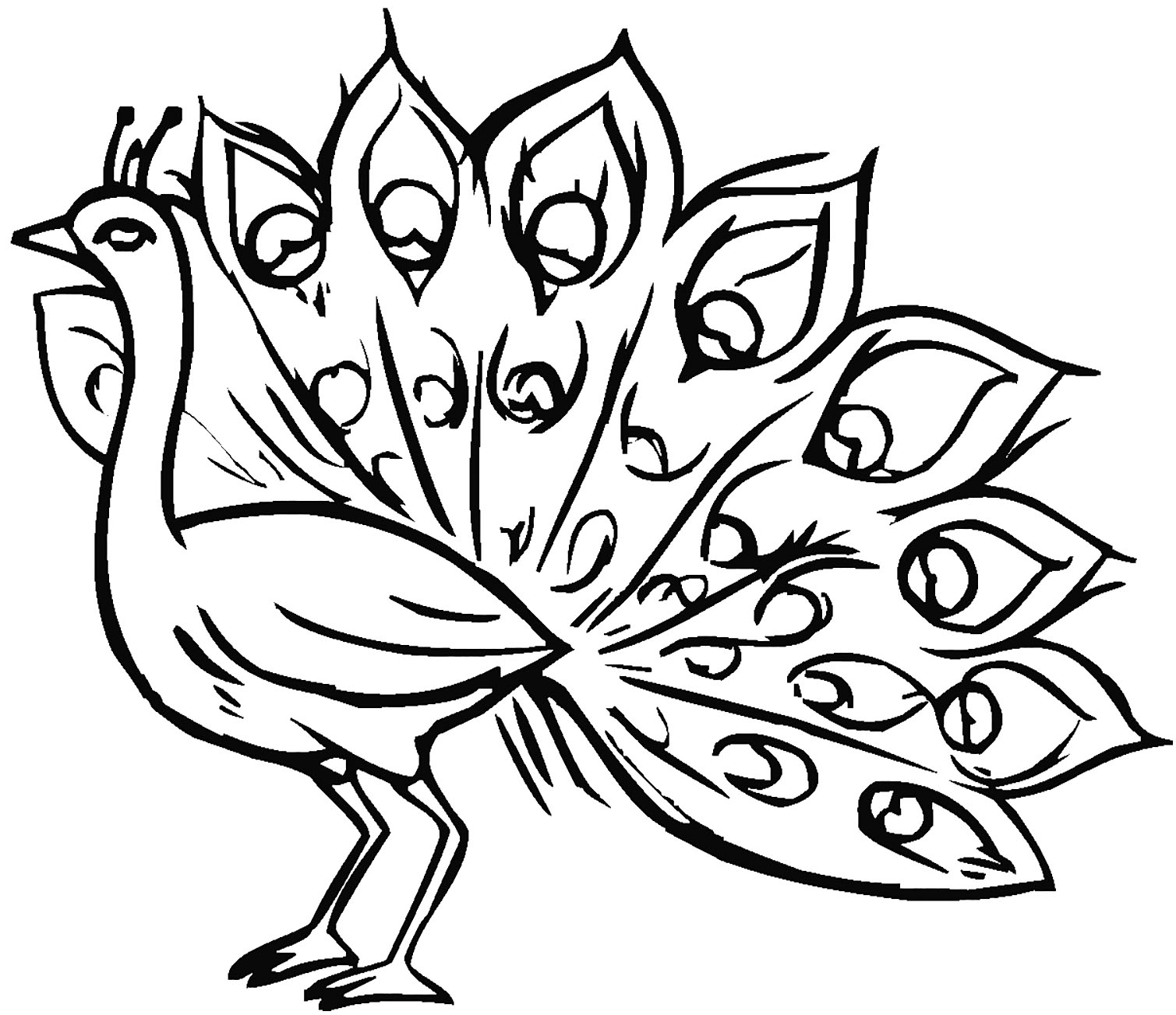 peacock coloring peacock coloring pages peacock coloring