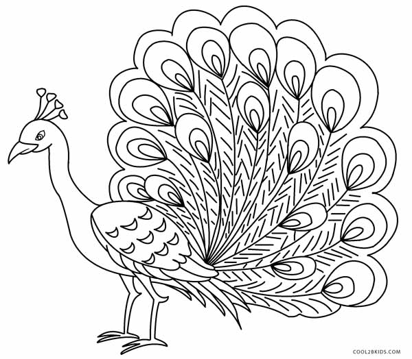 peacock coloring printable peacock coloring pages for kids cool2bkids peacock coloring