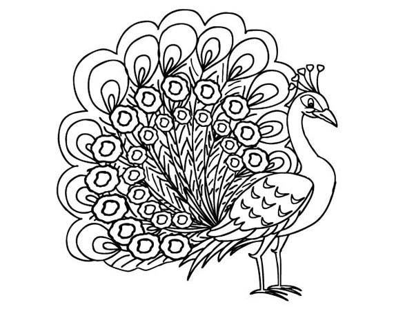 peacock pictures for colouring peacock coloring pages getcoloringpagescom colouring pictures peacock for