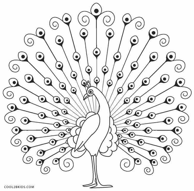 Peacock pictures for colouring