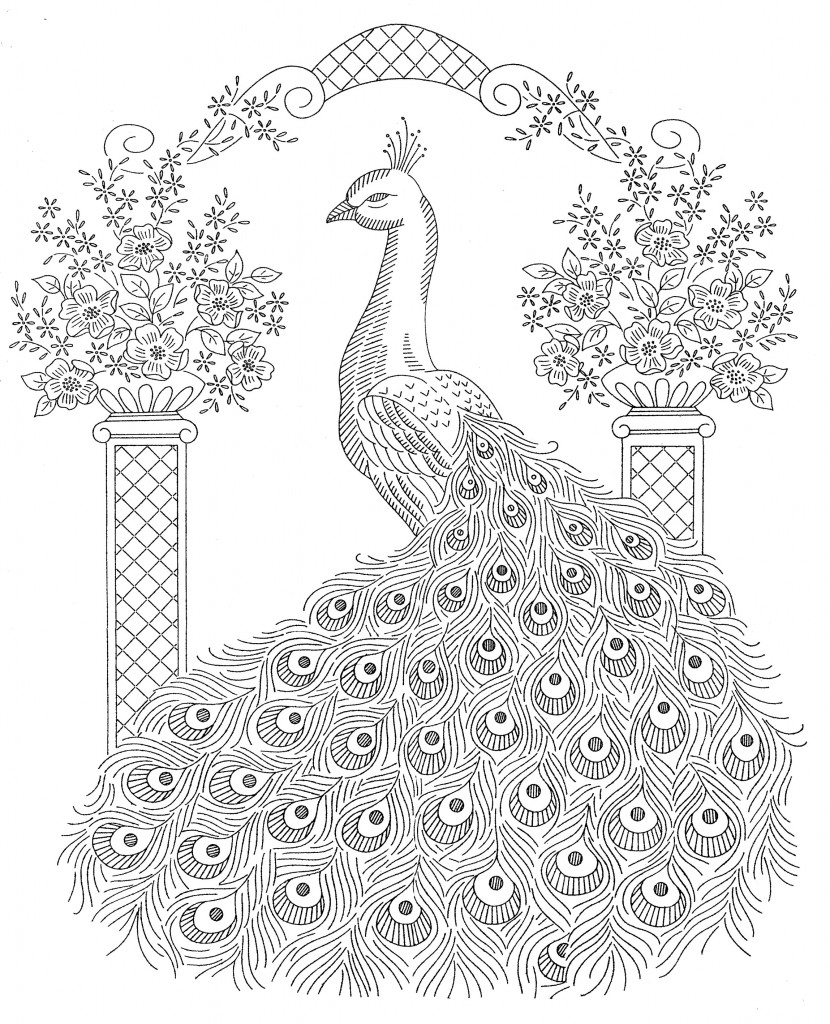 peacock pictures for colouring peacock coloring pages to download and print for free for colouring peacock pictures
