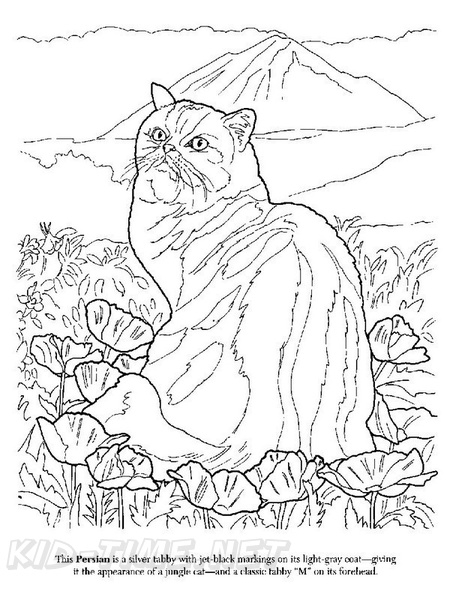 persian cat coloring pages animal coloring persian cats coloring pages persian cat pages coloring