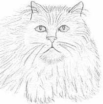 persian cat coloring pages animal coloring persian cats coloring pages persian coloring pages cat