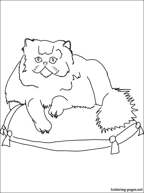 persian cat coloring pages coloring page of a persian cat kitten colorfoolish coloring persian cat pages