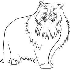persian cat coloring pages coloring pages for kids cats top 22 first rate persian coloring cat persian pages