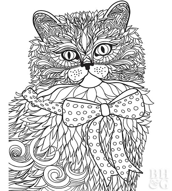 persian cat coloring pages coloring pictures of cat persian pages coloring cat