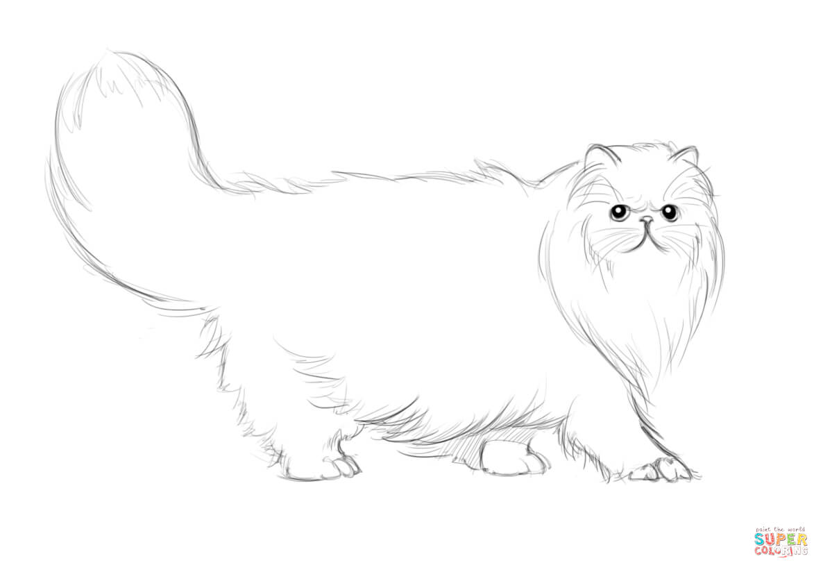 Persian cat coloring pages