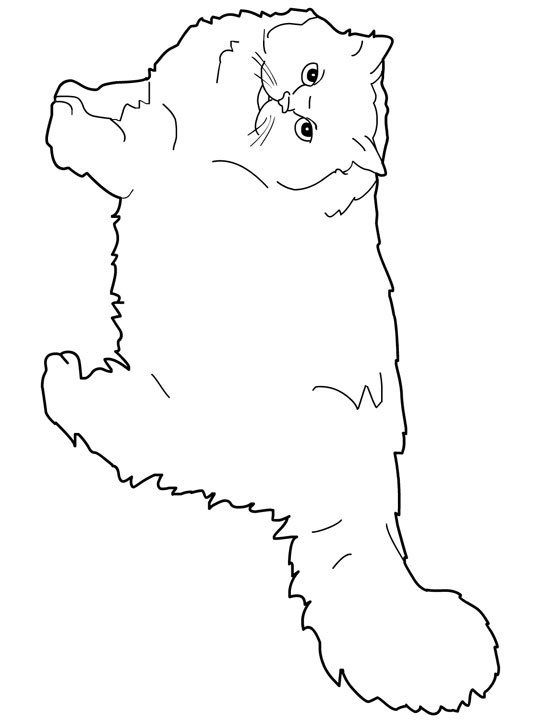 persian cat coloring pages top 30 free printable cat coloring pages for kids pages coloring persian cat