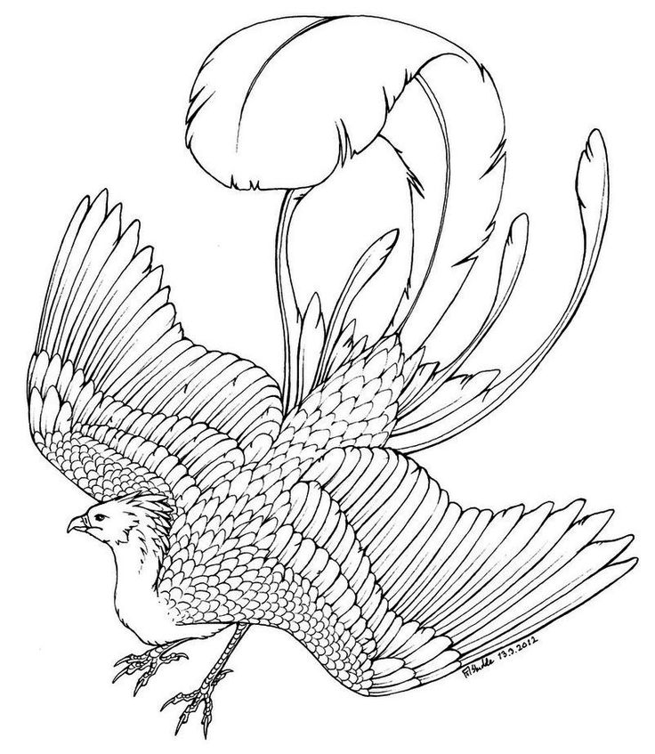 phoenix coloring pages phoenix bird coloring page to relieve stress harry coloring phoenix pages