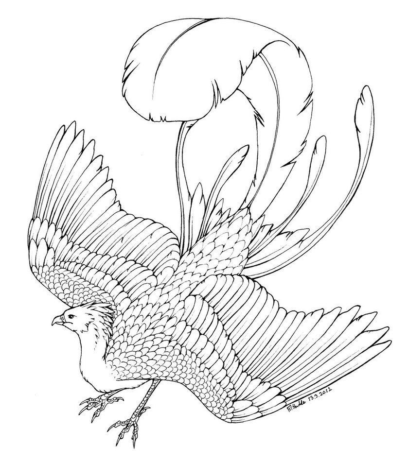phoenix coloring pages phoenix coloring page by cheekydesignz on deviantart phoenix pages coloring