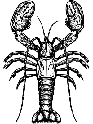 pics of lobsters lobster claw drawing at getdrawingscom free for pics lobsters of